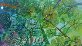 Amazonia - soaring