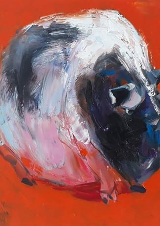 Vietnamese black and white pig #3