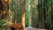 EV Chargers coming to CA National Parks