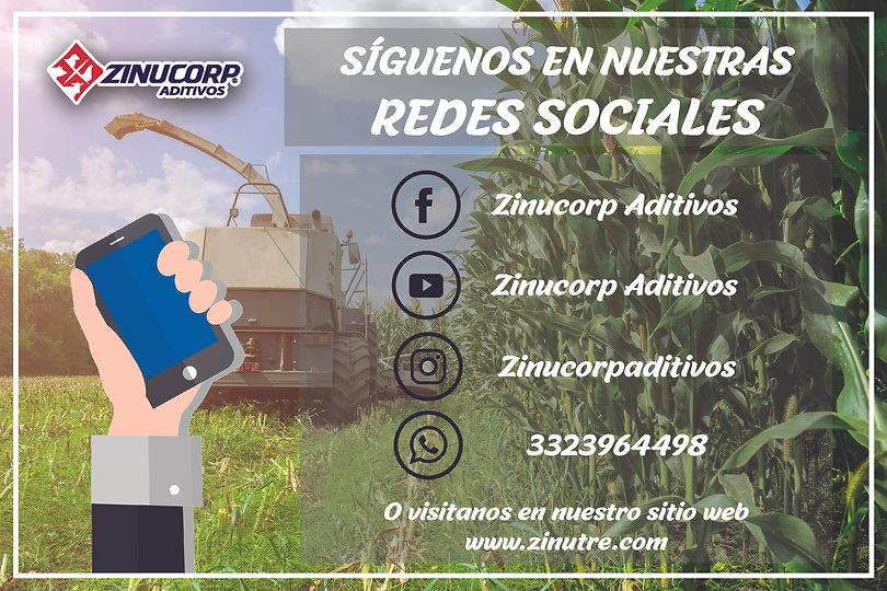 Redes Sociales 2_Mesa de trabajo 1.jpg