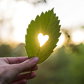 Leaf with heart shape All Seasons Insurance