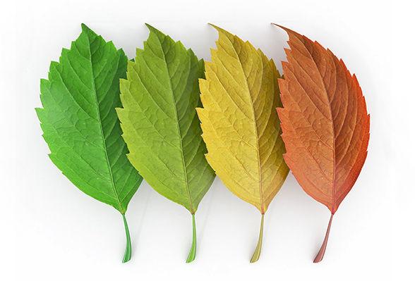 Leaf Illustration green gold orange