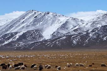 spring in Pamir mountains
