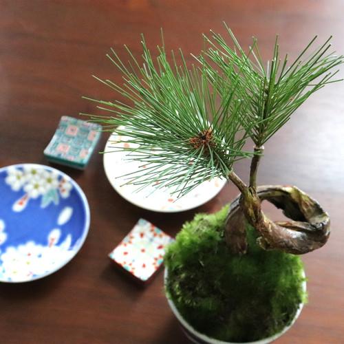 植物→松3本 食器→縁起小皿×箸置