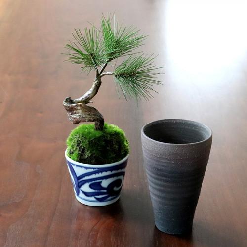 植物→松吹き流し 食器→ビアカップ