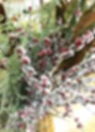 11月image3.jpg