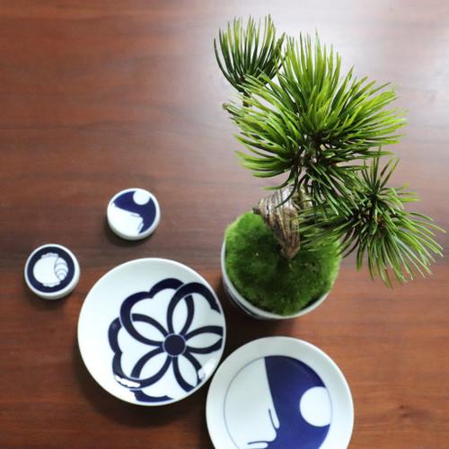 植物→松吹き流し 食器→komon小皿×箸置