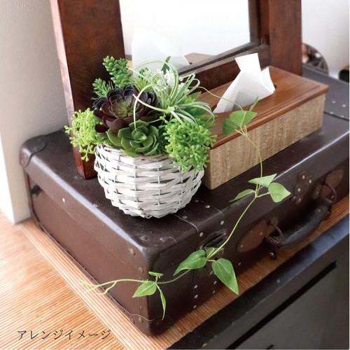 多肉植物 グリーンプランツ アソートセット.jpg