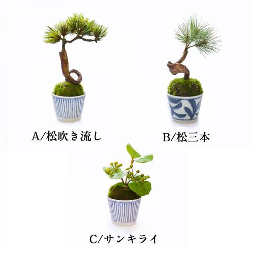 松3本 松吹き流し サンキライ 3種の中からお選びください。