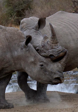 dad rhino.jpg