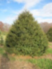 Christmas trees for 2018 web site (1).JP