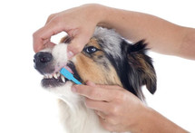 dog-brushing-teeth.jpg