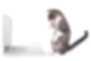 stock-photo-kitten-sitting-up-looking-at