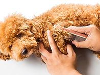 matted-hair-dog-480515462.jpg