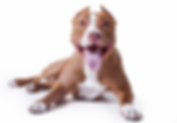Dr-Kristie-on-pit-bulls-and-dog-bitesTHU