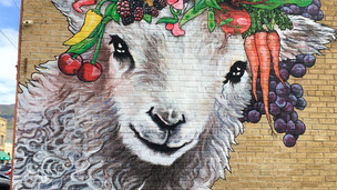 Paonia Lamb