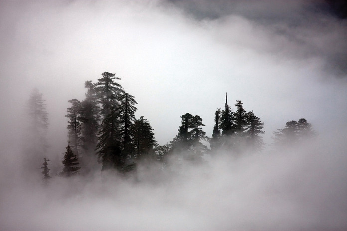 1319 Fog1.jpg