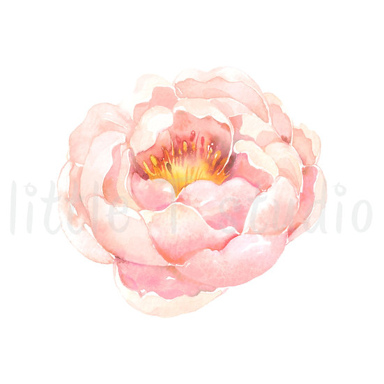Soft Pink Rose Floral Watercolor Stickers - Style 1147