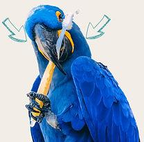 Envir Parrot.jpg