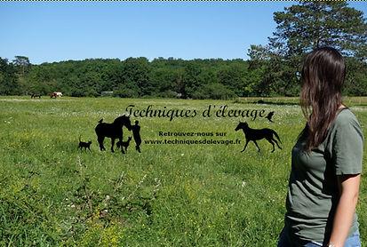 Photo d'illustration membre de l'équipe dans un pré avec des chevaux