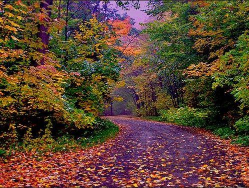 fall color palette, fall interior decor