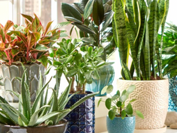 Monday Musings: 7 Ridiculously Easy Plants to Grow Indoors