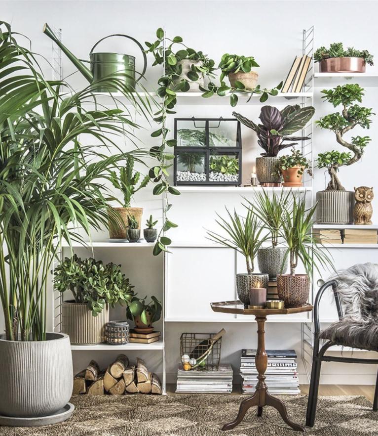 house plants, indoor decor