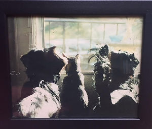 looking out window.jpg