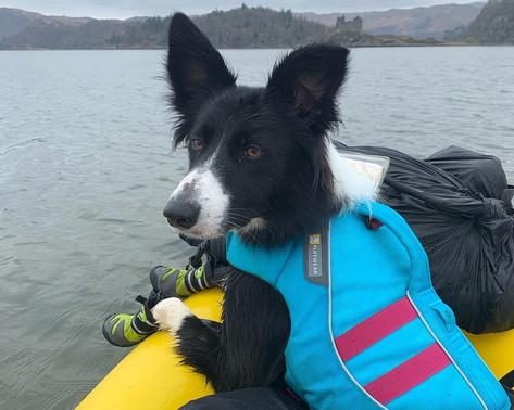 Packraft Adventure Millie Dog