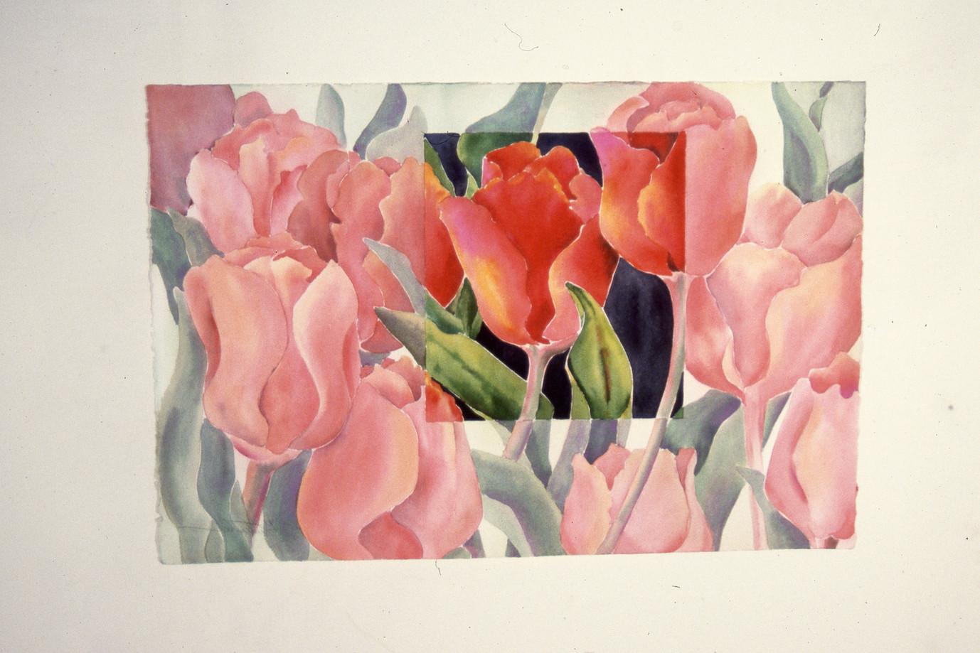 """A Field of Tulips"""