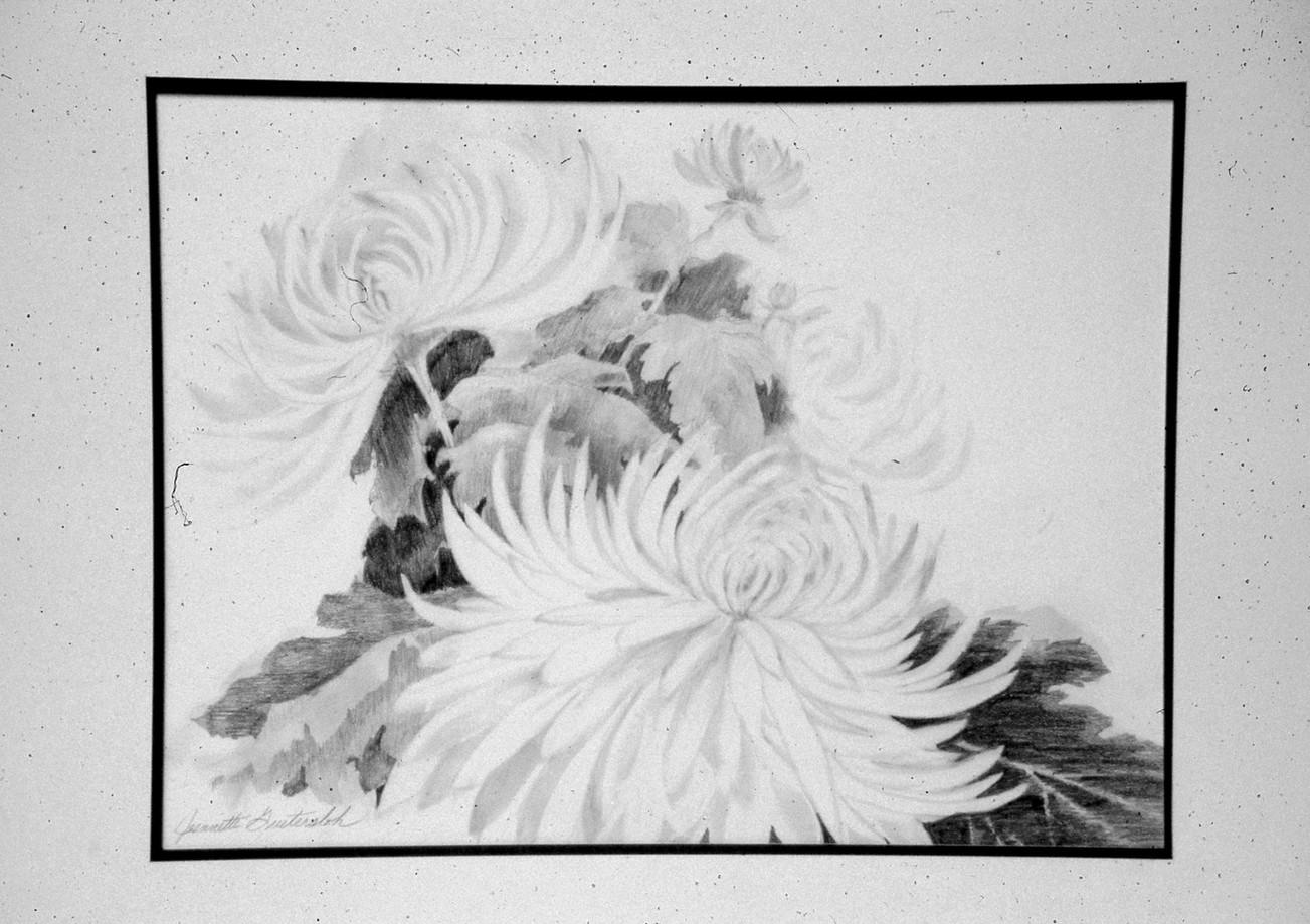 sample%20commission.Chrysanthemum_edited