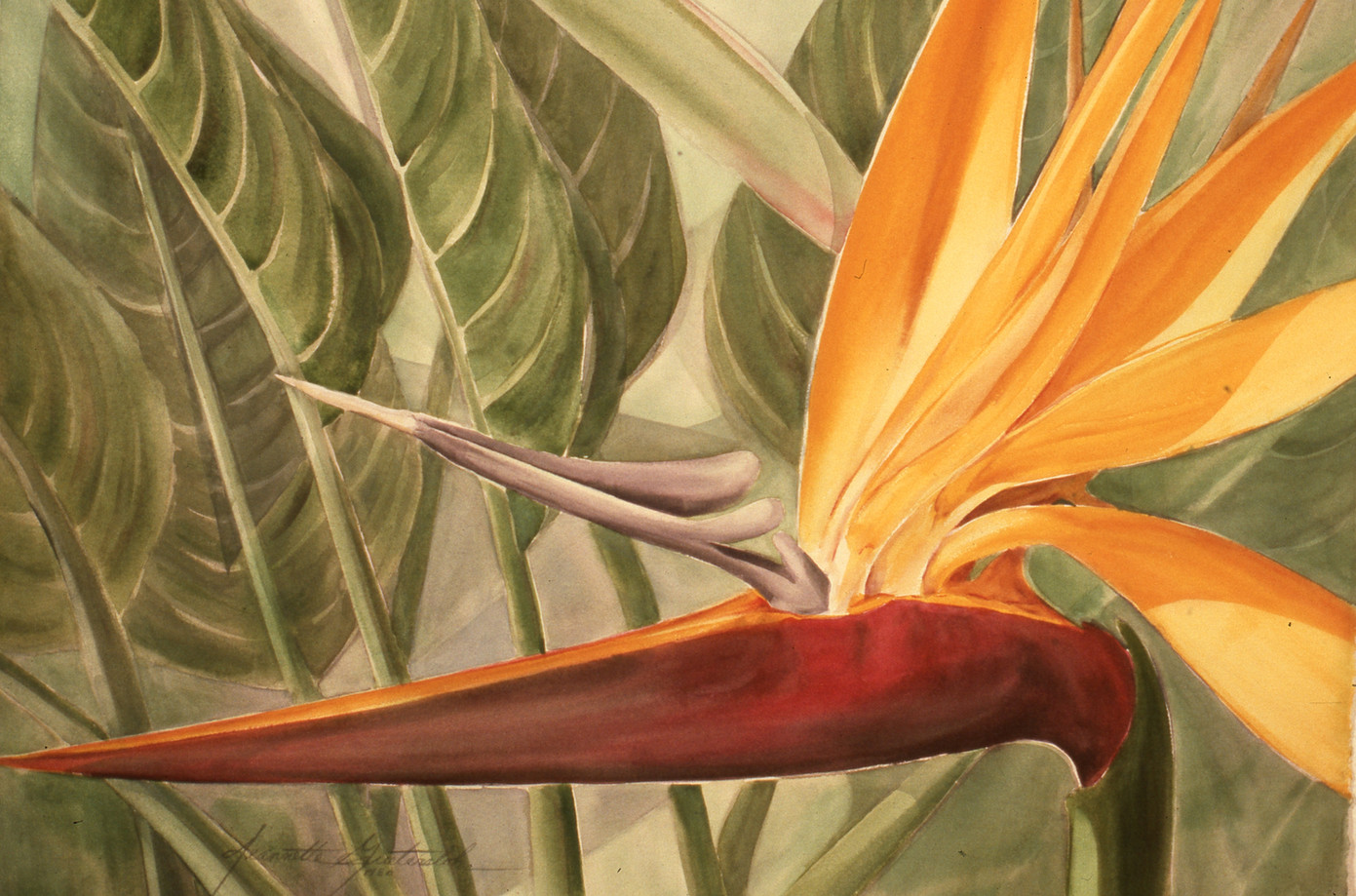 """Bird of Paradise"" series. # 1"