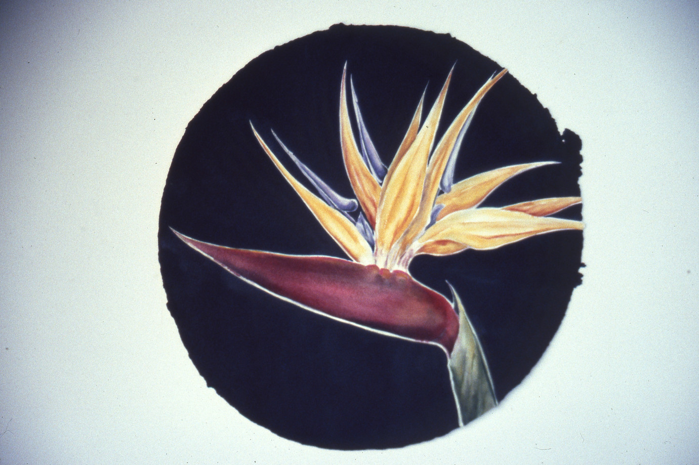 """Bird of Paradise"" series, # 6"