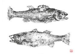 right fish left fish