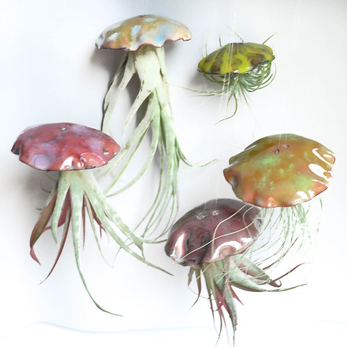 Small Airplant Jellyfish