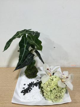 IMG_4939.jp