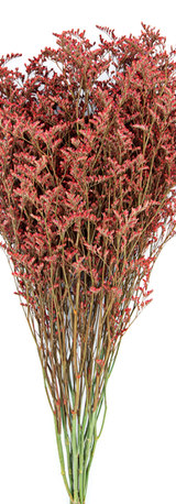Tinted Red Limonium