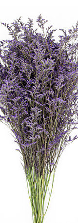 Tinted Purple Limonium