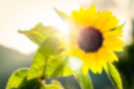 Canva - Sonnenblume mit Sonne im Gegenli