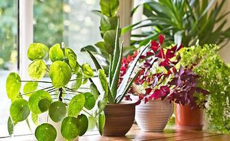 magical plants.jpg