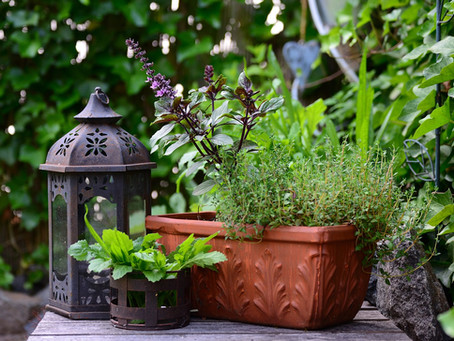 Bienenfreundliche DIY-Ideen für Balkon & Garten