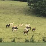 Confinement des poneys1