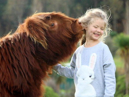 Our Aubree and Leah are on the cover of the NZ Lifestyle Highland Society Calendar