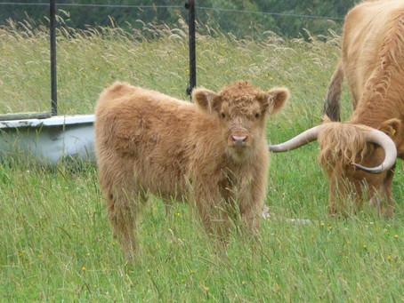 Farming Organically - Healthy Soil = Healthy Pasture = Healthy Animals.