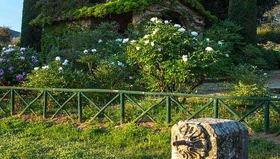Moutan giardino botanico