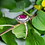 Thumbnail: 10kt Rose Gold Rubellite Tourmaline Ring