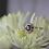 Thumbnail: Brevani Sapphire & Diamond Ring