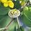 Thumbnail: Canary Yellow Diamond Halo Ring