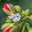 Thumbnail: Liliana Diamond Marquise Ring