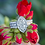Thumbnail: Jolee Diamond Ring